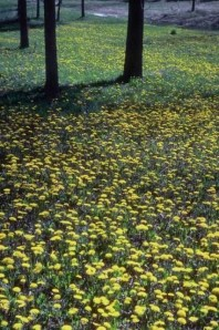 Yellow field, Lisa Kamen, What Is Your Happiness